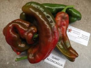 Tomato Peppers Giant 10 Seeds-Paprika
