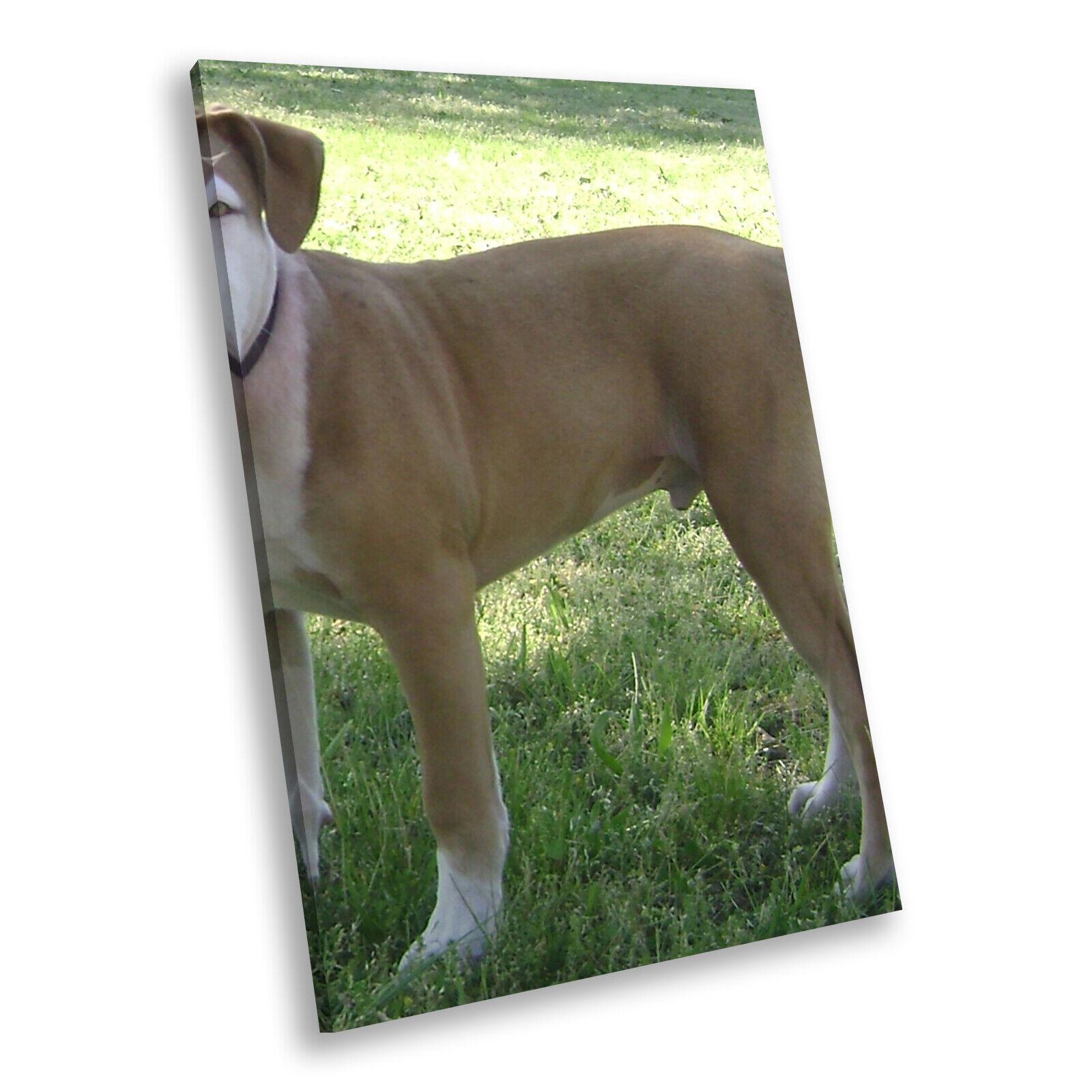 braun Weiß Puppy Hund  Portrait Animal Canvas Framed Kunst Large Bild