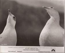 PF Jonathan Livingston Seagull