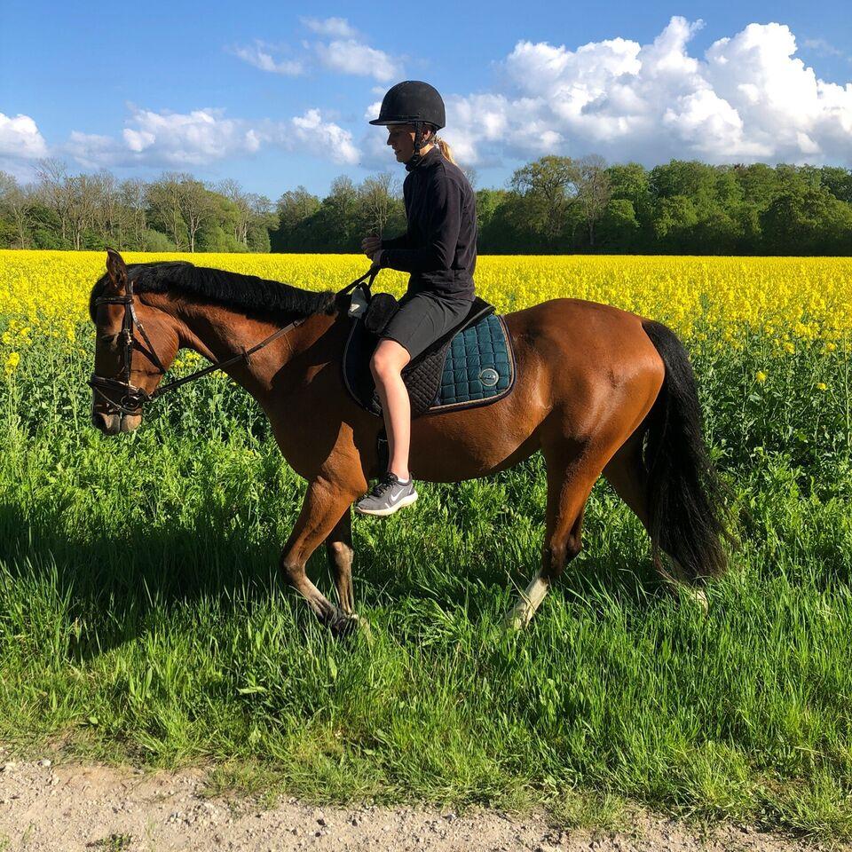 Blanding, hoppe, 3 år