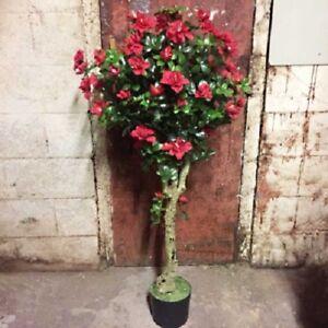 2-x-120cm-AZALEA-TOPIARY-FLOWER-TREE-POTTED-Get-2-Plants