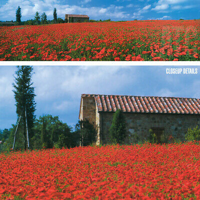 60w X18h Field Of Poppies By Bob Mackie Photography Panoramic Floral Canvas Ebay
