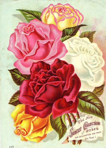flower Roses Floral gems1896 retro poster wall lodge s living room