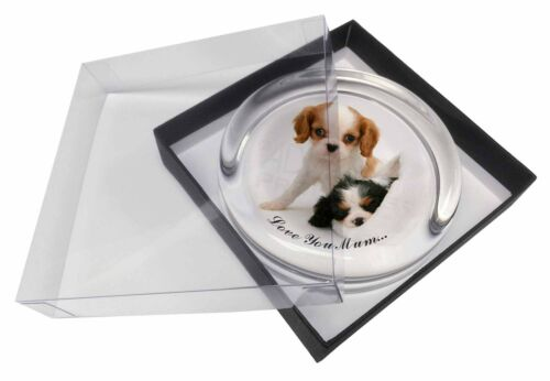 Cavalier King Charles 'Love You Mum' Glass Paper in Gift Bo, ADSKC10lymPW