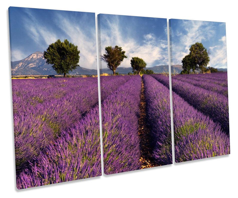 Lavender Field Landscape Floral TREBLE CANVAS WALL ART Box Framed Print