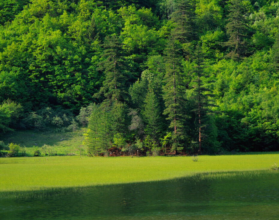 3D Grünes Grünes Grünes Gras Bäume 8 Tapete Wandgemälde Tapete Tapeten Bild Familie DE Summer | Qualität und Verbraucher an erster Stelle  | Attraktive Mode  |  a68abc