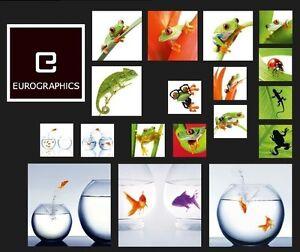 GLASBILDER-WAND-BILD-DECO-GLASS-FLOAT-GLAS-FROSCH-FRECHE-FROSCHE-GOLDFISCH-NATUR