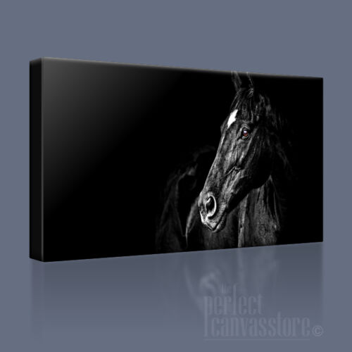 BLACK HORSE STUNNING POPULAR CONTEMPORARY CANVAS ART PRINT PICTURE Art Williams