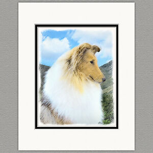 Collie-Dog-Original-Art-Print-8x10-Matted-to-11x14
