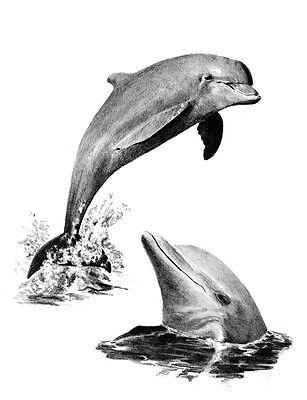 delfin malen einfach