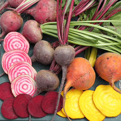 Exciting mix of colours and varieties ORGANIC Beetroot Mixed Colours 50 Seeds