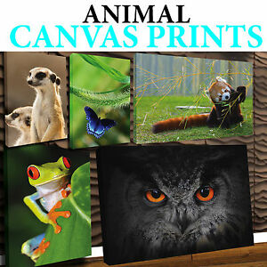 Animal Canvas 3 More Sizes Available Free Uk P P Ebay