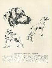 RHODESIAN RIDGEBACK VINTAGE DOG PRINT SKETCH PAGE ARTIST BRIDGET OLERENSHAW