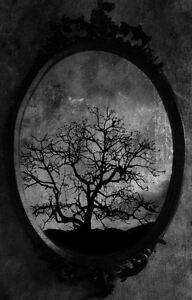 Framed Print Dead Tree In A Gothic Mirror Picture