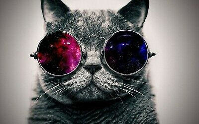 wall poster homes cat with sunglass funny animal poster