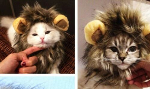 Lion/'s Mane For Cats pretty cute kittens
