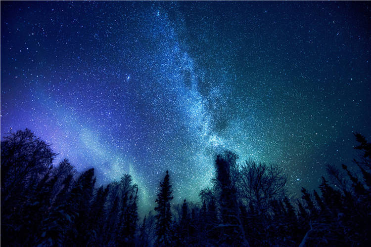Mystery Forest Starry Night Sky 3D Full Wall Mural Ceiling Photo Wallpaper Decal