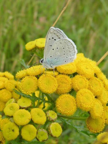 Papillon et abeilles saule 150 G intérieur fleurs sauvages pleut pneus