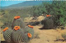 BG13808 barrel cactus on the desert  flower arizona  usa