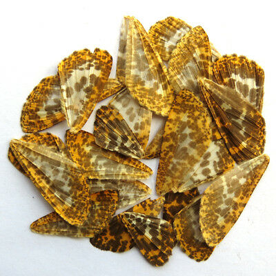 24 pcs REAL BUTTERFLY wing jewelry butterfly material ooak fairy DIY artwork
