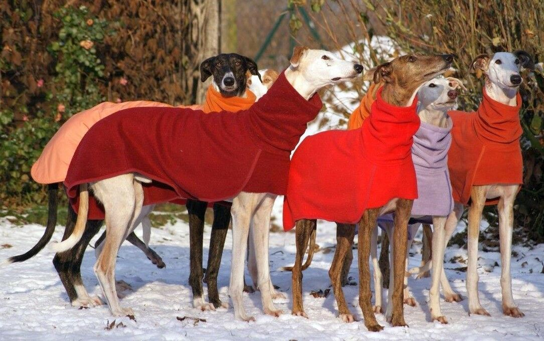 Windhundmantel (einlagig) Fleece Windhund Galgo Mantel 18 Farben XS - XL   | Online-Shop