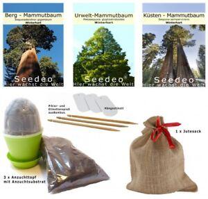 Intelligent Seedeo ® Séquoia Anzuchtset. Trois Variétés En Jute Hotte Bonsai Convient.-afficher Le Titre D'origine