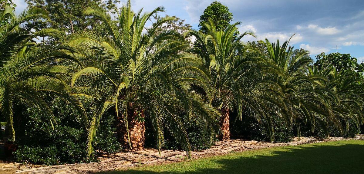 palmtopiaaustralia