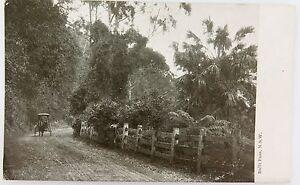 SUPERB-EARLY-1900-S-BULLI-PASS-NSW-UNUSED-POSTCARD