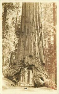 Drive Thru Tree Yosemite California Wawona NP RPPC Photo Postcard 20-4425