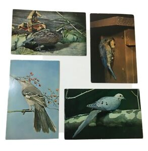 Lot-Of-5-Bird-Postcards-1961-Nature-Press-Chic-Natural-History-Museum-Unposted