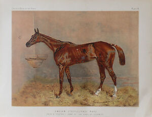 1876 Antique Chromo HORSE Print EMBLEM STEEPLECHASE MARE Earl of Coventry