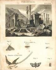1802  Ruins Of Persepolis Pheaton Or Tropic Bird Copperplate
