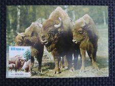 POLEN MK ANIMALS BISON WISENT MAXIMUMKARTE CARTE MAXIMUM CARD MC CM a9343