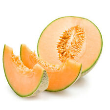 Heirloom Hales Best Cantaloupe 30 Seeds Non-GMO USA + FREE Gift & COMB S/H