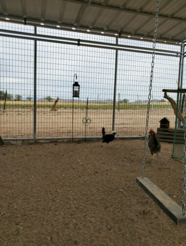 Chicken Hatching Eggs 6 Assorted Barnyard Mix including Rare Breeds