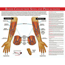 Blood Collection Sites Poster 17w X 22h 1 Ea