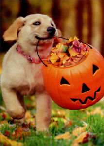 Puppy With Pumpkin Bucket Avanti Cute Dog Halloween Card 12615743784