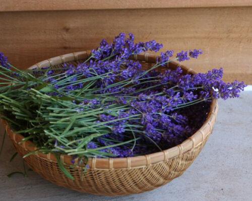 Lavender seeds Duft Lavandula angustifolia 500+ Samen Echter Lavendel