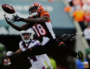 AJ-Green-Autographed-Cincinnati-Bengals-16x20-PF-Photo-Catch-vs-Bills-JSA-W-Wh