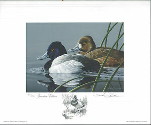 1989 Federal Duck Stamp RW56 Lesser Scaup Print by Neil Anderson EXECUTIVE  ED