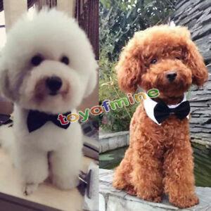 Ropa-collar-del-animal-domestico-del-perro-de-la-pajarita-corbata-para-bodas