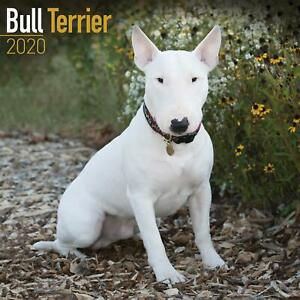 Bull-Terrier-2020-Official-Square-Wall-Calendar