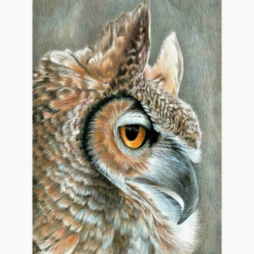"""Colour Pencil By Number Kit  SEPIA OWL  9/"""" X 12/"""""""