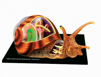 SNAIL ANATOMY MODEL/PUZZLE, 4D Vision Kit #26109  TEDCO SCIENCE TOYS