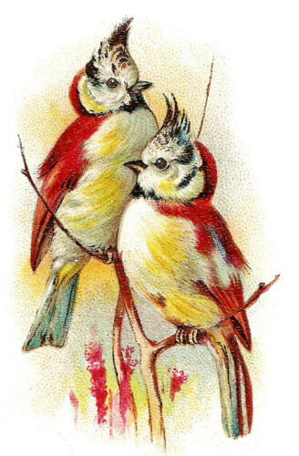 "Red Crested BirdsFLONZ 0656 Vintage Birds 4pcs 2.5/""x3.5/""each Waterslide Decals"