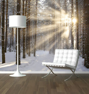 winter wald bei sonnenaufgang natur foto tapete wandkunst. Black Bedroom Furniture Sets. Home Design Ideas