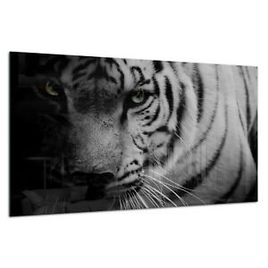 CoopéRative Verre Trempé Impression Photo Wall Art Photo B&w Tiger Wild Dark Prizma Gwa0343-afficher Le Titre D'origine