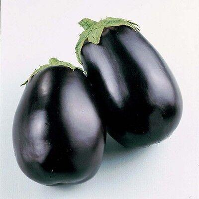 VEGETABLE  AUBERGINE  EGG PLANT  BLACK BEAUTY 800 SEEDS