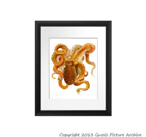 Vintage Octopus /& Squids prints set of 12 Sea Life Coastal Beach Decor Wall Art