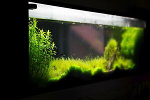 Wandaquarium 100 Liter Mit Besatzung Und Zubehör+aquascaping Zubehör Co2 Anlage Schrecklicher Wert Fische & Aquarien Haustierbedarf